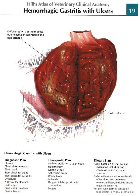 Atlas of veterinary clinical anatomy