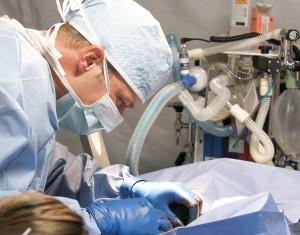 veterinarian-809930_1280